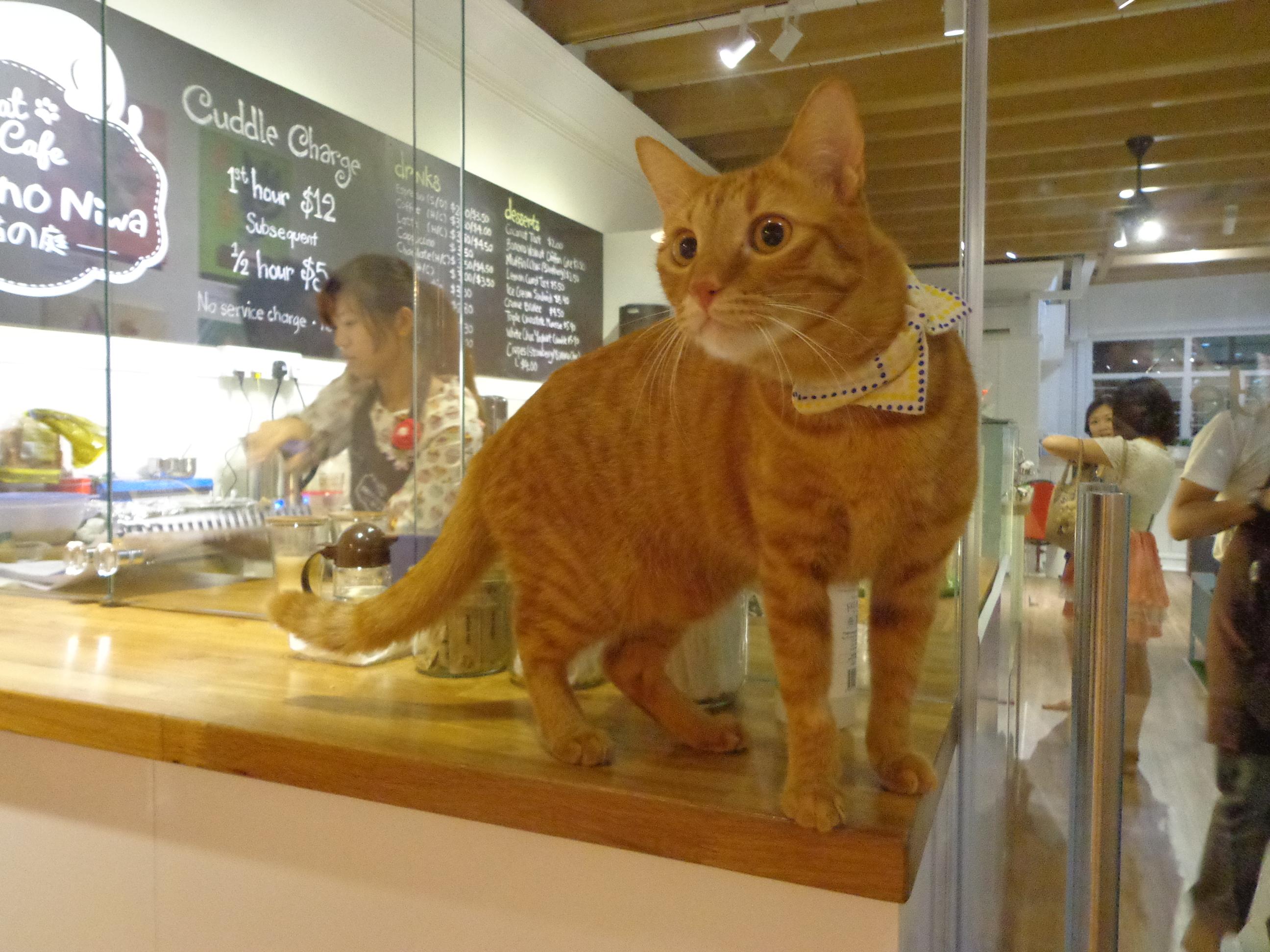 Cat Cafe West Virginia